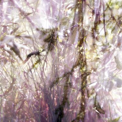 Blumen, 2004-05, C-print, Cm 170x120_4