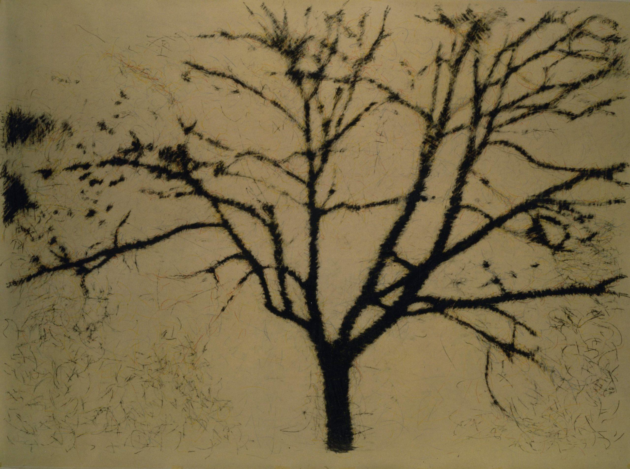 Pancrazzi, Fuori Registro (albero), 1995, grafite su carta su tela, 190×270 cm